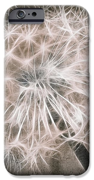 Dandelion in Brown iPhone Case by Aimelle