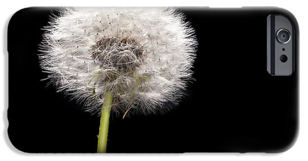 Weed iPhone Cases - Dandelion Seedhead iPhone Case by Steve Gadomski