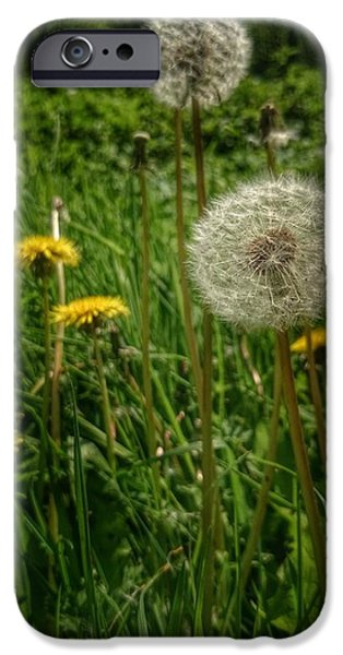 Lightweight iPhone Cases - Dandelion seeds iPhone Case by Isabella Abbie Shores