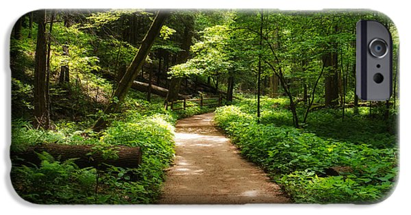 Pathway iPhone Cases - Dappled Forest Magic iPhone Case by Rachel Cohen