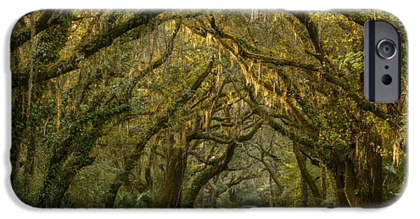 Dirt iPhone Cases - Dappled Morning iPhone Case by Mike Lang