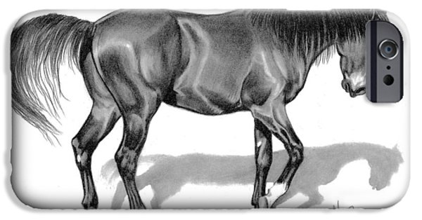 Drawing Of A Horse iPhone Cases - Dark Bay Thoroughbred Colt iPhone Case by Cheryl Poland