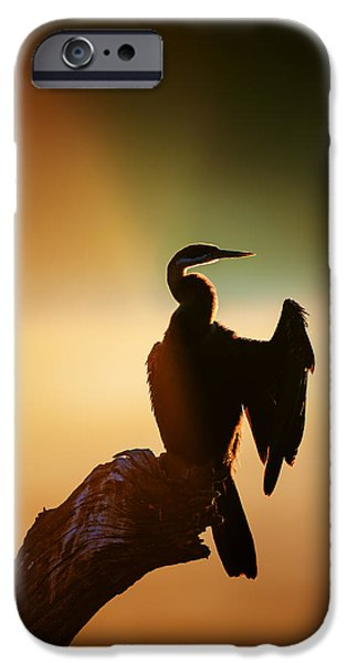 One Animal iPhone Cases - Darter Bird with misty sunrise iPhone Case by Johan Swanepoel