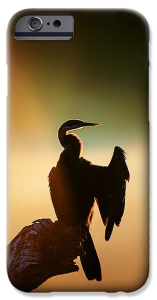 Morning iPhone Cases - Darter Bird with misty sunrise iPhone Case by Johan Swanepoel