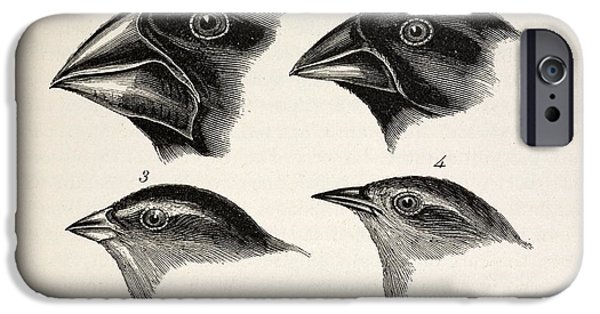 Beagles iPhone Cases - Darwins Galapagos Finches iPhone Case by Paul D Stewart