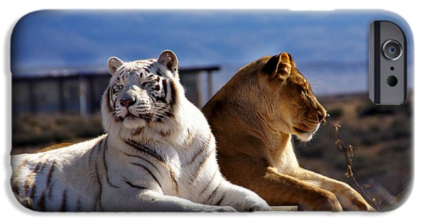 The Tiger iPhone Cases - Day Dreamers iPhone Case by Martin Massari