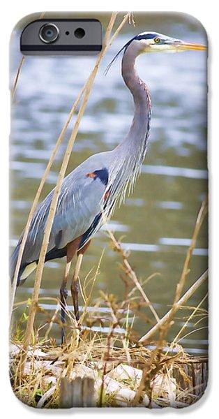 Florida Wildlife iPhone Cases - De Leon Springs Blue iPhone Case by Deborah Benoit