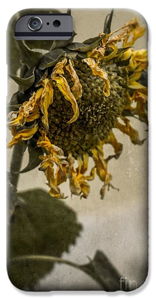 Dirty iPhone Cases - Dead Sunflower iPhone Case by Carlos Caetano