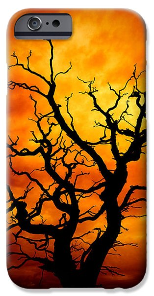 Frightening iPhone Cases - Dead Tree iPhone Case by Meirion Matthias