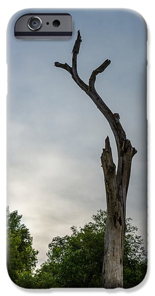 Rainy Day iPhone Cases - Dead Tree on Bleak Rainy Day iPhone Case by Donald  Erickson