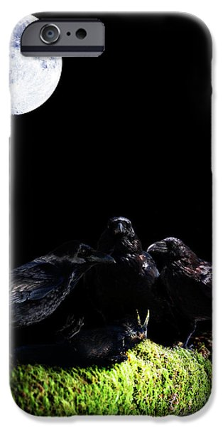 Ghastly iPhone Cases - Death of a Young Raven iPhone Case by Wingsdomain Art and Photography