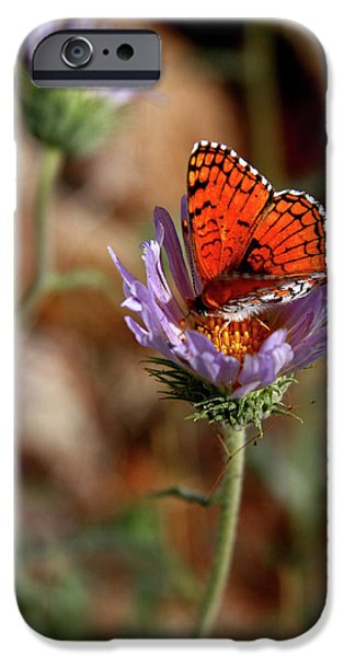 Desert Scape iPhone Cases - Death Valley Butterfly iPhone Case by Chris Brannen