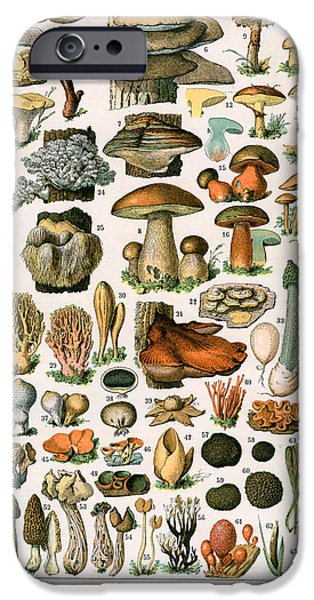 Mushrooms iPhone Cases - Decorative Print of Champignons by Demoulin iPhone Case by American School