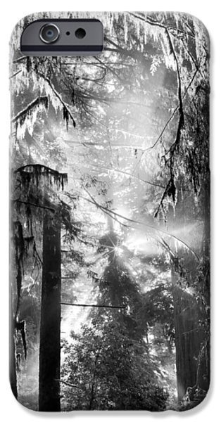 Mist iPhone Cases - Deep Forest Light iPhone Case by Leland D Howard
