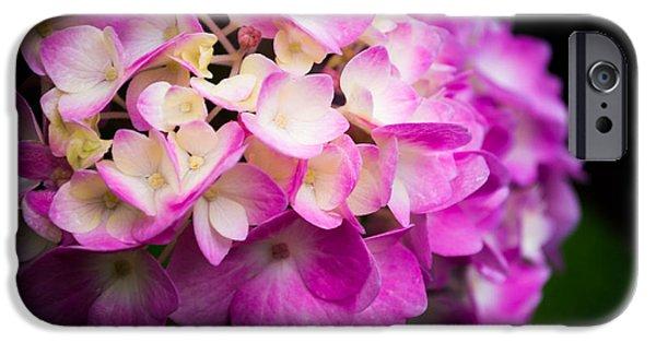 Purple Hydrangeas iPhone Cases - Deep Purples iPhone Case by Parker Cunningham