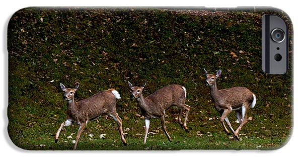 Animation iPhone Cases - Deer Frolic iPhone Case by Warren M Gray