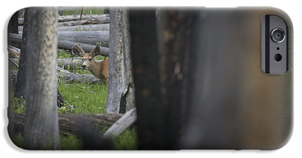 Wildfire iPhone Cases - Deer in the Burn iPhone Case by Noah Bryant