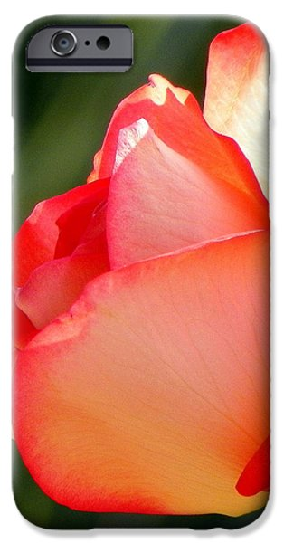 Delicate Beauty iPhone Case by KAREN WILES