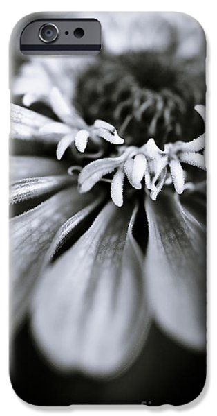 Nature Abstract iPhone Cases - Delicate Daisy II iPhone Case by Danny Pugh
