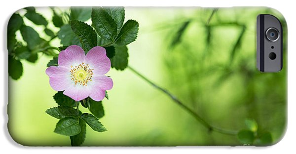 Rosaceae iPhone Cases - Delicate Dog Rose iPhone Case by Tim Gainey