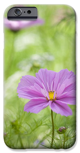 Cosmo iPhone Cases - Delicate Pink iPhone Case by Tim Gainey
