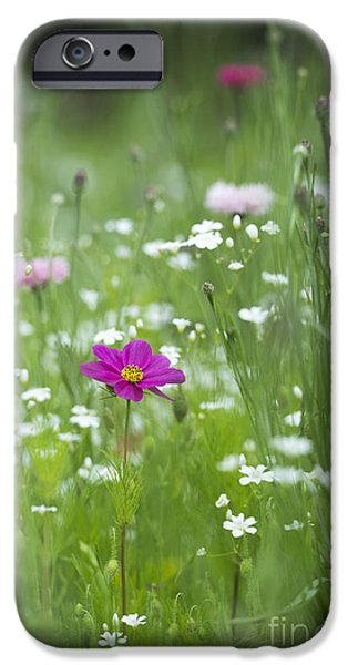 Cosmo iPhone Cases - Delicate Wildflower Meadow iPhone Case by Tim Gainey