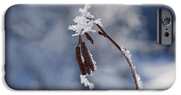 Frost Photographs iPhone Cases - Delicate Winter iPhone Case by Mike  Dawson