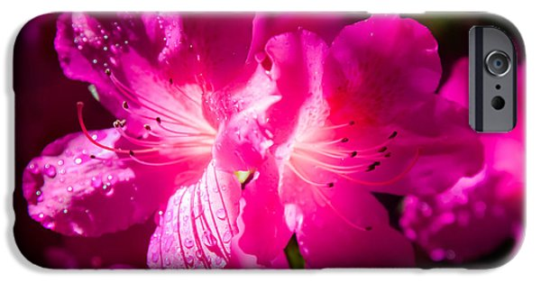 Little Girl iPhone Cases - DELIGHT in CREATION iPhone Case by Karen Wiles