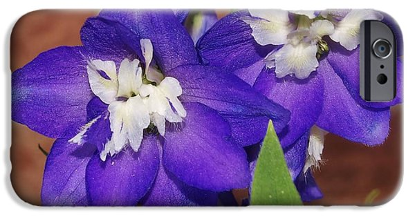 Floral Photographs iPhone Cases - Delphinium iPhone Case by Denise Irving