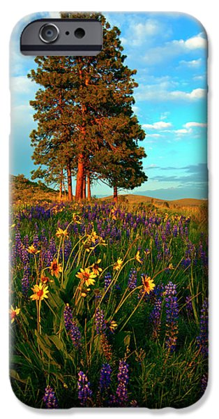 Meadow Photographs iPhone Cases - Desert Pines Meadow iPhone Case by Mike  Dawson