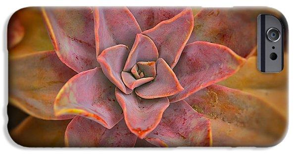 Plant iPhone Cases - Desert Star iPhone Case by Ana V  Ramirez
