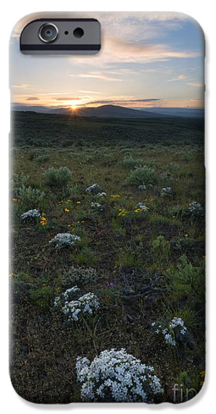 Phlox iPhone Cases - Desert Sunburst iPhone Case by Mike Dawson