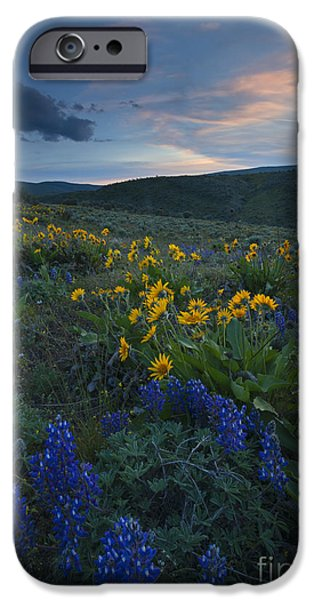 Yakima Valley iPhone Cases - Desert Wildflower Sunset iPhone Case by Mike Dawson