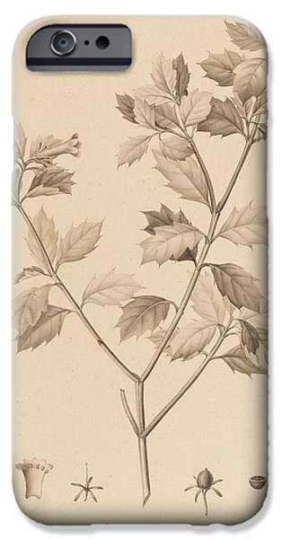 Botanical Drawings iPhone Cases - Desfonainia Spinosa iPhone Case by Pierre Joseph Redoute