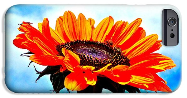 Sunflower Photograph iPhone Cases - Devotion iPhone Case by Gwyn Newcombe