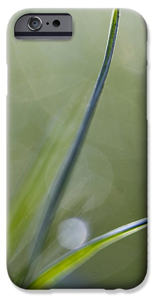 Dew Point iPhone Case by Rebecca Cozart