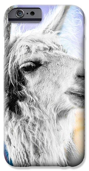 Llama iPhone Cases - Dirtbag Llama iPhone Case by TC Morgan