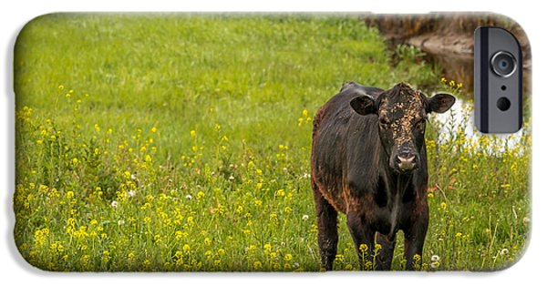 Nebraska iPhone Cases - Dirty Face Cow in Flowers iPhone Case by Jeffrey Henry