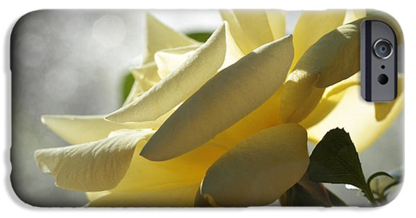 Botanical Photographs iPhone Cases - Diva  iPhone Case by Connie Handscomb