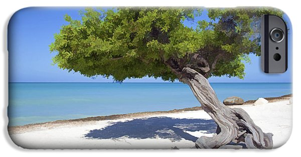 Peacefull iPhone Cases - Divi Tree of Aruba iPhone Case by David Letts