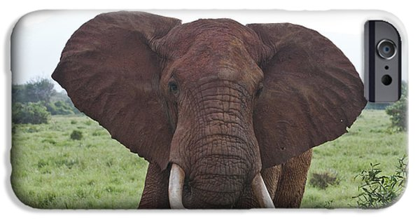 Elephants iPhone Cases - Do not come closer iPhone Case by Meike Hofstetter