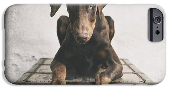 Doberman iPhone Cases - Doberman Pinscher Puppy 3 iPhone Case by Wolf Shadow  Photography