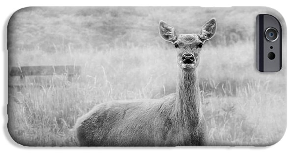 Pathway iPhone Cases - Doe A Deer A Female Deer In Mono iPhone Case by Linsey Williams