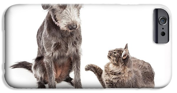 Domestic Short Hair Cat iPhone Cases - Dog and Cat Laying Together Looking Forward iPhone Case by Susan  Schmitz