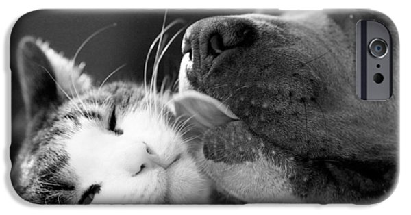 Black Dog iPhone Cases - Dog And Cat  iPhone Case by Sumit Mehndiratta