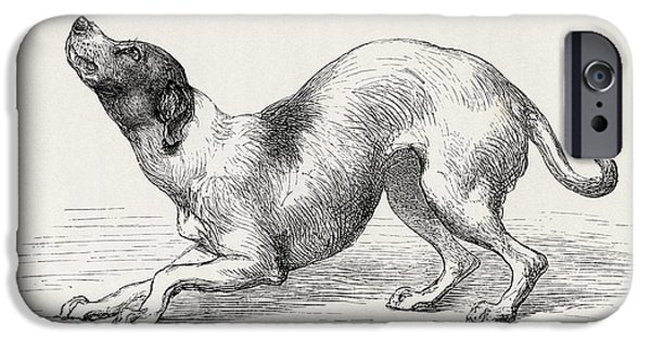Animal Drawings iPhone Cases - Dog In A Humble And Affectionate Frame iPhone Case by Ken Welsh