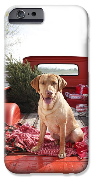 Dog iPhone Cases - Dog In Truck Bed With Pine Tree Outdoors iPhone Case by Gillham Studios