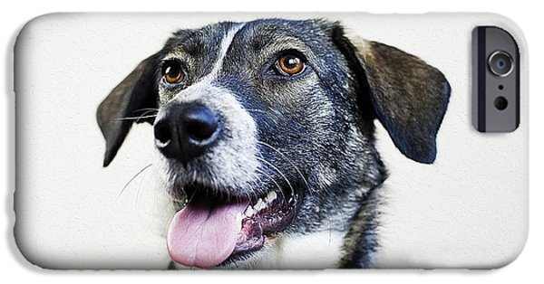 Cute Puppy iPhone Cases - Dog portrait iPhone Case by Queso Espinosa