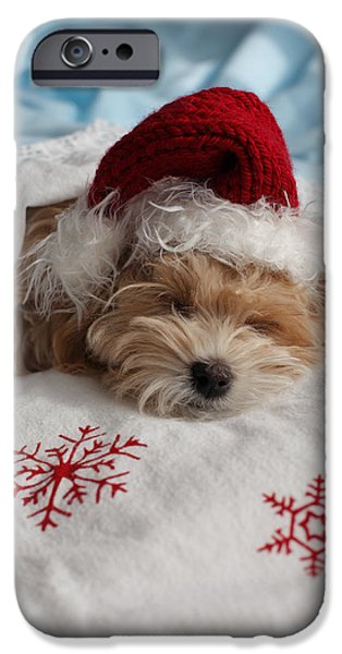 Sleepy iPhone Cases - Dog Sleeping In Bed With Santa Hat iPhone Case by Ink and Main