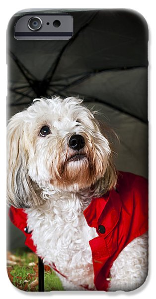 Dog under umbrella iPhone Case by Elena Elisseeva
